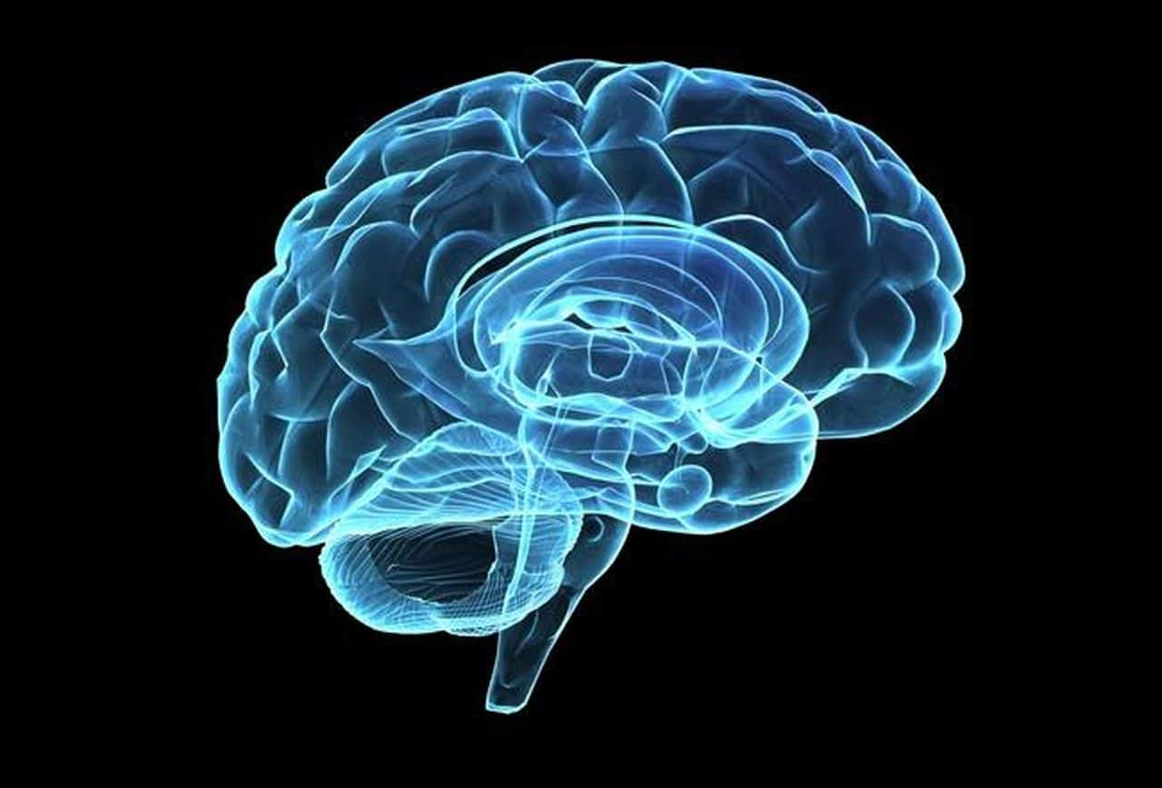 Study suggests evolutionary changes in human brain potentially cause anxiety
