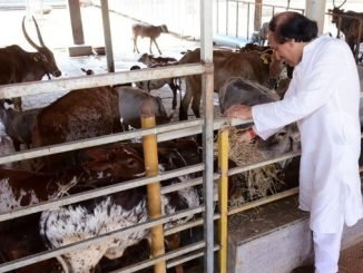 Dinesh Shahra Foundation intensifies its Gau Shakti Abhiyan amid pandemic - Digpu News